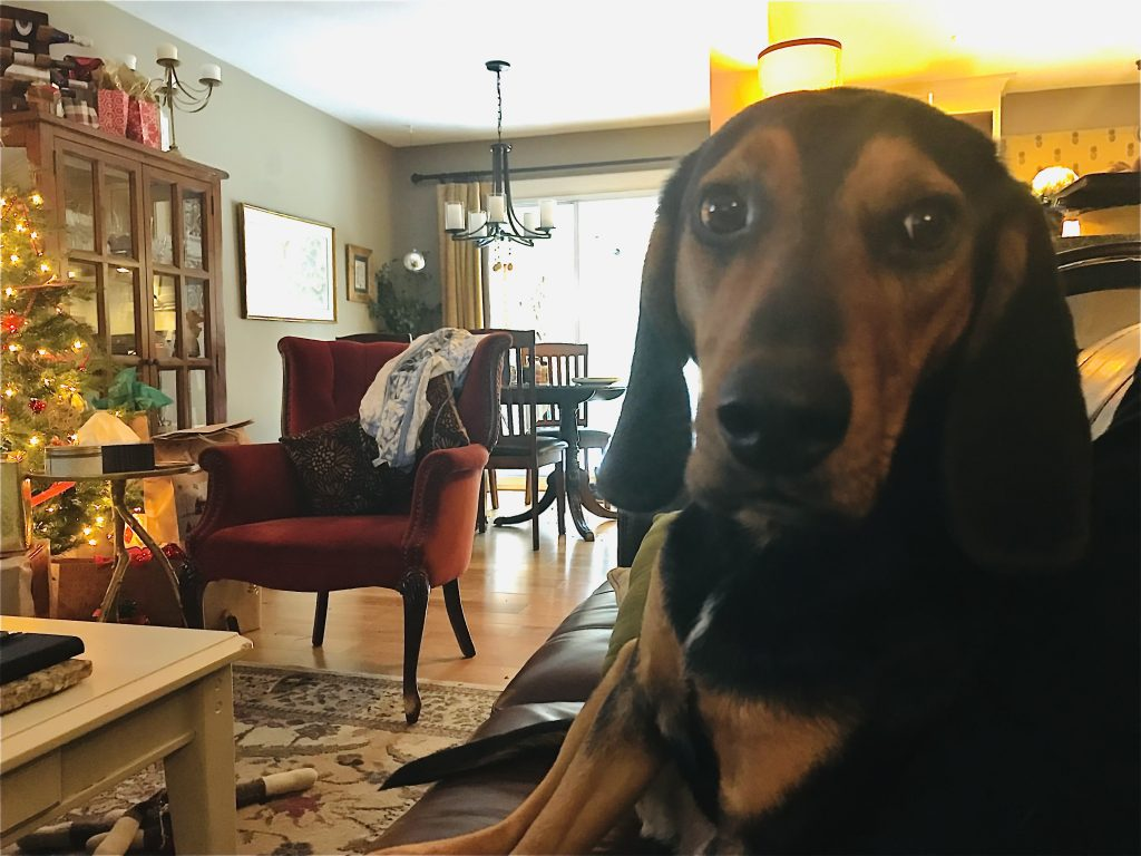 Hound Dog - Howling and Barking Sound Effects