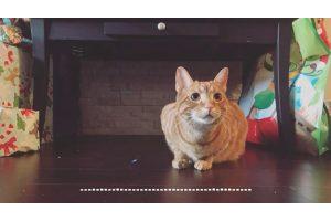 Cat Eating Crunchy Food